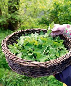 Just Eat It, Homemade Christmas Gifts, Edible Garden, What To Cook, Preserves, Pickles, Health And Wellness, Harvest, Herbalism