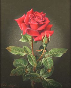 Wolfgang Grünberg (1909-2001) - Red Rose, oil on canvas, 27,5 x 22,5 cm.