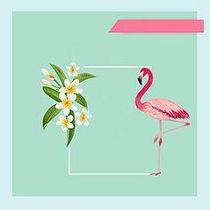 Simple blue background Flamingo