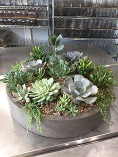 Succulent Bowls, Succulent Gardening, Succulent Arrangements, Succulent Terrarium, Cacti And Succulents, Planting Succulents, Container Gardening, Garden Plants, Indoor Plants