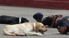 Petition · Stop euthanasia of dogs and horses retired from service of armed forces · Change.org