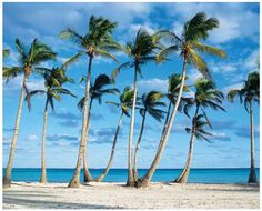 JP London MD4A082 105Feet Wide by 85Feet High Tropical Ocean Beach Palm Rows Removable Full Wall Mural >>> More info could be found at the image url.Note:It is affiliate link to Amazon.