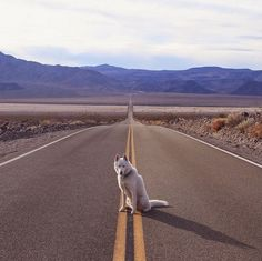 Wolf no Death Valley (Foto: John Stortz/Instagram)