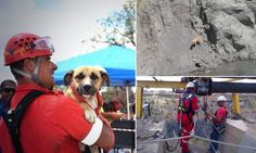 A dog has been rescued from the world's largest man-made hole after being trapped for eight days.  The dog was kept alive by kind-hearted people who threw food down the disused diamond mine in Kimberley, South Africa.  Emergency workers finally brought the dog, nicknamed Underdog.
