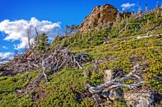The Ghost Forest and Mount Henry - A view up through the Ghost Forest and a prominent point on Mount Henry while on the Scenic Point Trail. This Trail is at Two Medicine wishing Glacier National Park.