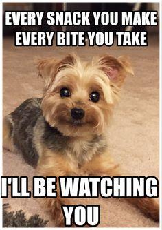 Hahaha #humor #dogs