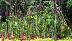 El Orquideorama, ubicado en la Av. 2N 48 10, es uno de los pocos sitios VERDES de Cali.  Es un sitio campestre dentro de la Ciudad en donde se conservan las principales especies de Orquídeas Colombianas; siendo un remanso de tranquilidad y belleza. #DeCaliSeHablaBien Cali, Colonial, Plants, Special Library, Fences, Exhibitions, Yearly, Priest, Perms