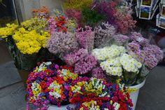 Italian flowers, Rome, Italy.