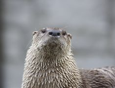 Otter looks stern and proud - June 14, 2012