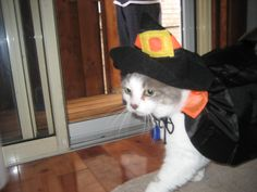 Casper the Halloween Cat, who loved to dress up <3