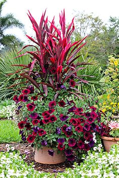 Love red? Then check out this gorgeous container garden that incorporated varying heights of red flowers and plants. #gardening #red