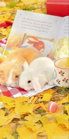 Cute Baby Bunnies, Cute Baby Animals, Cute Babies, Scenery Wallpaper, Flower Wallpaper, Aesthetic Themes, Aesthetic Pictures, Cute Photos, Cute Pictures