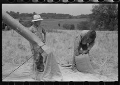 Threshing wheat on farm in Oldham County, Kentucky | Library of Congress