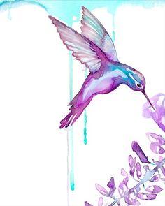 beautiful humingbird