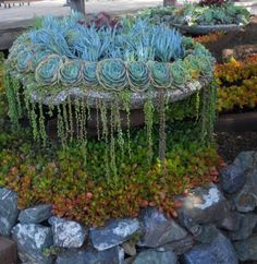 Succulent gardening is a popular trend. Check out these awesome and creative container ideas for small succulent garden designs.Creative Ways To Make An Enchanting Succulent Garden In Your Backyard life: Top 43 Most viewed looks like a waterfa Succulent Gardening, Succulent Pots, Cacti And Succulents, Planting Succulents, Container Gardening, Organic Gardening, Succulent Ideas, Indoor Gardening, Dream Garden