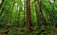 https://wallpapersafari.com/rain-forest-background/