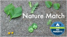nature match summer camp ideas