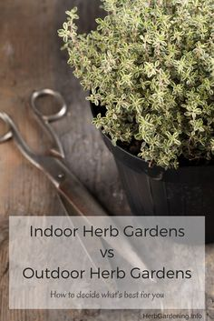 Herb Gardens vs Outdoor Herb Gardens: Which is Right for You? Indoor Herb Gardens vs Outdoor Herb Gardeners - How to Decide What's Right for You.Indoor Herb Gardens vs Outdoor Herb Gardeners - How to Decide What's Right for You. Hydroponic Gardening, Hydroponics, Organic Gardening, Container Gardening, Indoor Gardening, Indoor Herbs, Indoor Plants, Gardening For Beginners, Gardening Tips