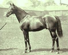 Orme(1889)Ormonde- Angelica By Galopin. 5x5 To Voltaire & Birdcatcher. 1/2 Brother To St Simon. 18 Starts 14 Wins 3 Seconds. $165,630. Won Champion S(Eng), Dewhurst S (Eng), Eclipse S(Eng)Twice, Middle Park S(Eng), Richmond S(Eng), Rous Memorial S(Ire). Leading Sire In Eng/Ire In 1899.