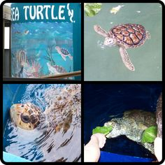 Sea Turtle Inc. - South Padre Island, TX