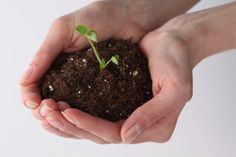 Terriccio per semina: come preparare i terricci per le piante da orto con metodo biodinamico