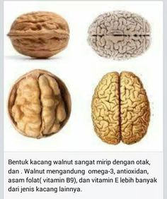 Walnut is a good brain food. The brain food are usually kinds of nut and bean