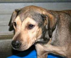 Phoebe & Pups is an adoptable Hound Dog in Chipley, FL. Phoebe had her babies! 7 brand new pups, looks like a lot of them will look like mom. Didn't want to disturb them too much so I just got a coupl...