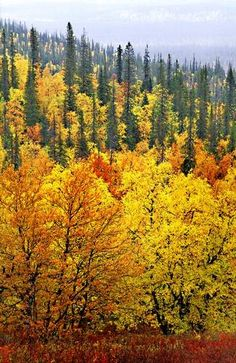 Fall in Lapland, Finland