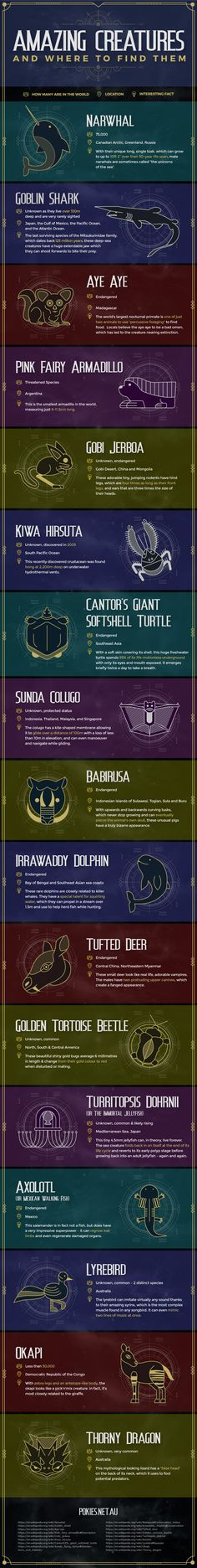 Inspired by Fantastic Beasts and Where to Find Them, here's an infographic that showcases the most mind-blowing animals hidden across the globe.