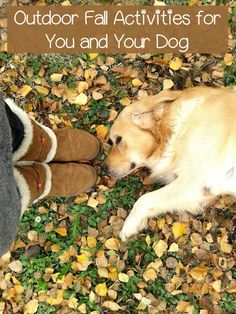 Planning outdoor fall activities for you and your dog is a great way to enjoy the fresh air and keep both of you in shape before the weather turns frigid. Pet Dogs, Dogs And Puppies, Doggies, Dogs 101, Autumn Activities, Dog Training Tips, Dog Care, Fur Babies, Your Dog