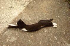 猫背ぴーん。