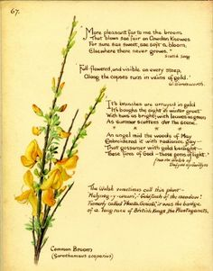 Even the poems are as beautiful… Botanical Illustration, Botanical Prints, Book Illustration, Illustrations, Happy Pictures, Happy Pics, Flower Poetry, Edith Holden, Magic Herbs