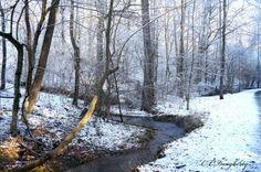 Winding Snowy Creek