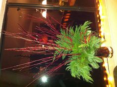 Christmas Arrangement using evergreens vines, and red berry branches!