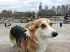 """Skeptical Corgi is skeptical of your """"Dude, can you look any more like a tourist than you do now???"""""""
