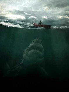 megalodon was a prehistoric shark that conservative estimates place at around 16 metres ft) long. For scale, the biggest example of the largest living fish species today -- the whale shark -- was metres ft). Scary Ocean, Scary Shark, Fauna Marina, Shark Art, Shark Pics, Shark Pictures, Great White Shark, Ocean Creatures, Alien Creatures