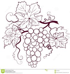 Grapes With Leaves - Download From Over 46 Million High Quality Stock Photos, Images, Vectors. Sign up for FREE today. Image: 6844629