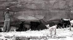 #goatvet likes these photos of goats in Ethiopia