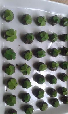 Herbalism, Vegan Recipes, Gluten Free, Keto, Diy Crafts, Baking, Drinks, Plants, Healthy Food