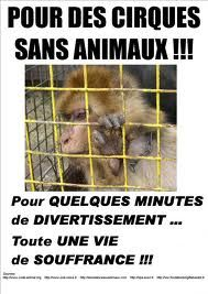 Défense animaux : pour des cirques sans animaux ! pour quelques minutes de divertissement... Toute une vie de souffrance.