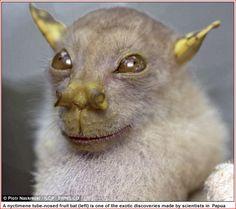 http://rocketnews24.com/2010/10/07/まるで宇宙生物!-科学者が世にも珍しい怪奇動物/