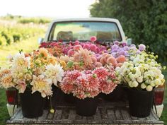 A truckload of freshly picked blooms from Floret farms