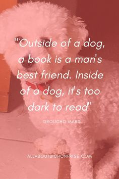 Our dogs are our best friends in the world without a doubt. Show your love and appreciation for these adorable doggos with these 21 inspiring dog quotes. Dog Quotes, Funny Quotes, Mans Best Friend, Best Friends, John Grogan, Andy Rooney, Great Quotes, Inspirational Quotes, Groucho Marx