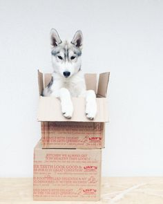 Boxes are fun!