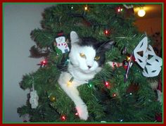Sometimes cats can get a little carried away with the Christmas spirit. Here are 20 lovely felines who weren't satisfied simply receiving presents. Cat Christmas Tree, Christmas Kitten, Christmas Hanukkah, Christmas Holidays, Christmas Ornaments, Xmas, Christmas Things, Lovely Creatures, Kids Learning Activities