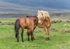 Исландские красавицы « FotoRelax