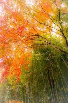 When someones tells about momiji we can imagine about Autumn in Japan! Yeah we can go to see kouyou in Autumn in Japan! It s super wonderful! Beautiful World, Beautiful Places, All Nature, Belleza Natural, Green And Orange, Pretty Pictures, Beautiful Landscapes, Mother Nature, Bunt