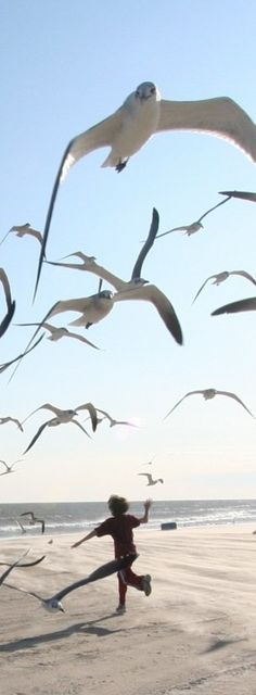 Galveston in a nutshell. | Running with the gulls in Galveston, Texas • photo: Ed Schipul on Flickr