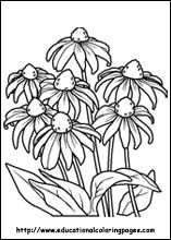 Flower Coloring Pages Free For Kids
