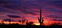 Google Image Result for http://carterlawaz.com/wp-content/uploads/2012/01/sunset-cactus1.png